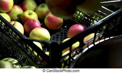 Hand taking apples from crate. Ripe juicy fruit. Most...