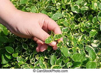 Hand Taking Care of Green Plant in Garden