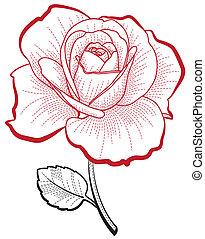 hand, tekening, roos
