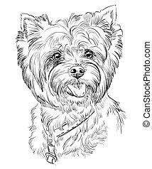 hand, tekening, vector, verticaal, van, yorkshire terrier