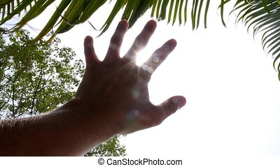 Hand to Sun through Palm Leaves. Slow Motion.