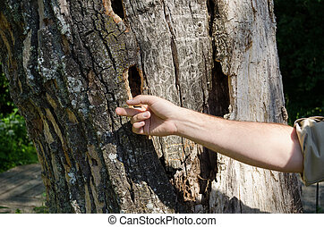 hand touches pest carved holes in old trunk - human hand...