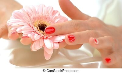 Hand touching gerbera, slow motion. Close up manicured hands...