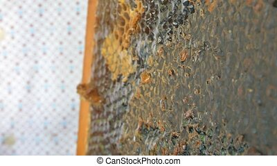 Hand using a knife to clog honeycombs with honey in a frame....