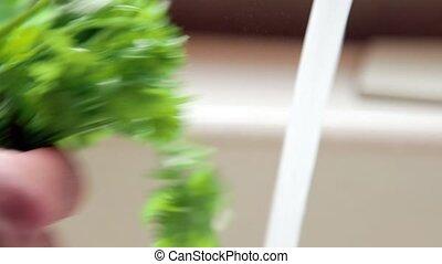 Hand washing fresh cilantro