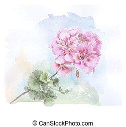 hand, watercolor, geranium, roze, getrokken, bloem