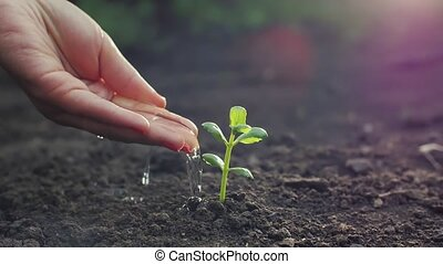 Hand watering a plant - Woman's hand watering a young plant