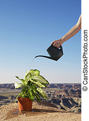 Hand watering potted plant on cliff
