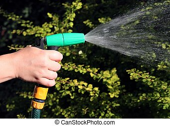 hand watering the plants on garden