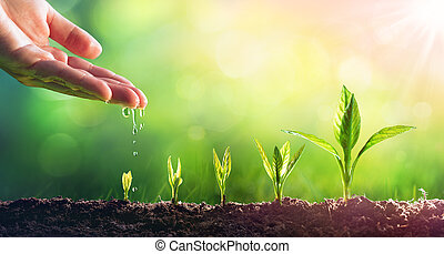 Hand Watering Young Plants In Growing