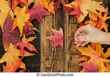 Autumns arrives
