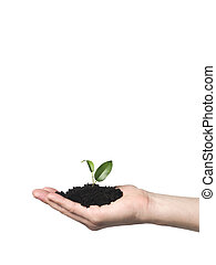 Hand with a growing plant