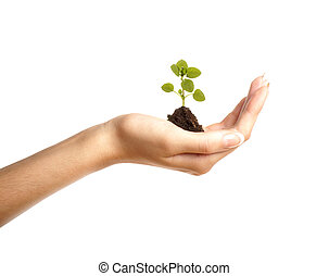 Hand with a little plant isolated on white