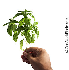 Hand with branch