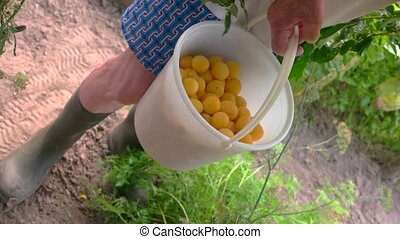 Hand with bucket of fruits.