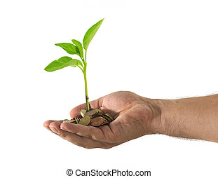 Hand with coins and a green plant growing