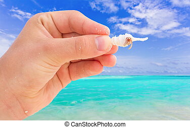 Hand with crab in sea shell