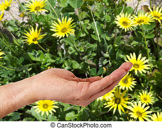 hand with flower background