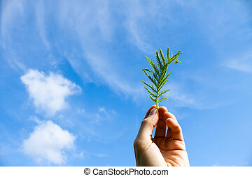 Hand with Flower on Blue Sky with Cloud Photo