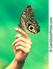Hand With Giant Butterfly
