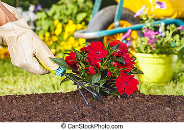 hand with glove using a rake on red flowers