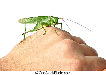 Hand with Grasshopper