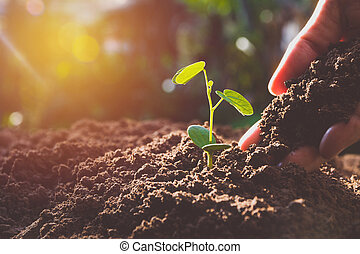 Hand with green young plant growing in soil on nature background