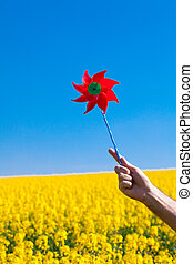 hand with pinwheel  in a field of yellow rape against the blue sky