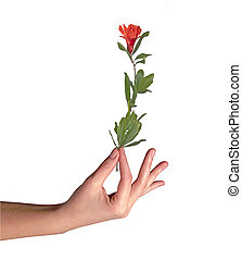 Hand with pomegranate flower