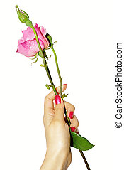 Hand with rose isolated on white