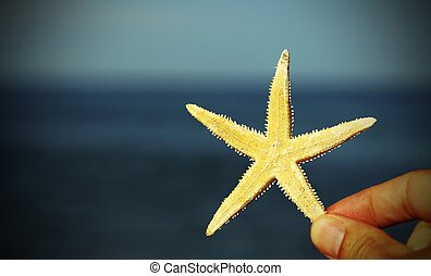 hand with the white starfish and sea