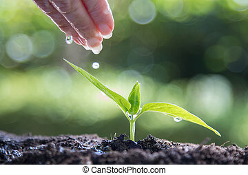 hand with water watering the young plant
