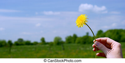 Hand with yellow dandelions on the blue sky