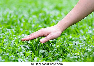 Hand woman touching grass - Hand woman touching lush grass