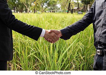 hand, zakenman, akker, landbouw, rillend, overeenkomst, rijst