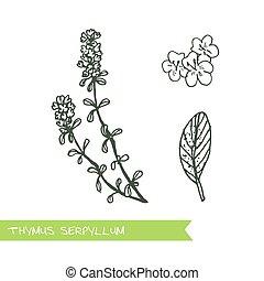 Handdrawn Illustration - Health and Nature Set