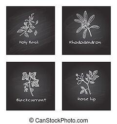 Handdrawn Medicinal Herbs - Health and Nature Set -...