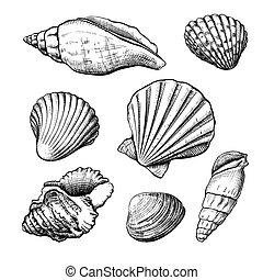 handdrawn, seashells, schizzo