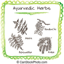 Handdrawn set - Ayurvedic Herbs - Handdrawn set of Ayurvedic...