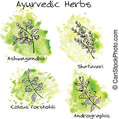 Handdrawn set - Ayurvedic Herbs