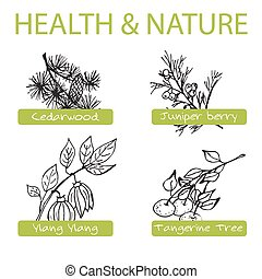 Handdrawn Set - Health and Nature. Collection of Medicine ...