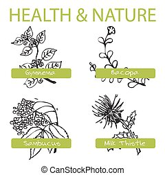 Handdrawn Set - Health and Nature. Collection of Medicine...