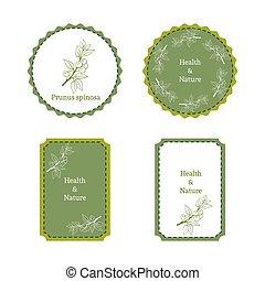 Handdrawn vector illustration blackthorn - Prunus spinosa....