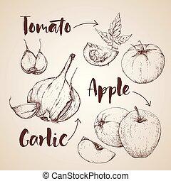 handdrawn, verdura, vettore, set.