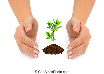 handen, en, plant