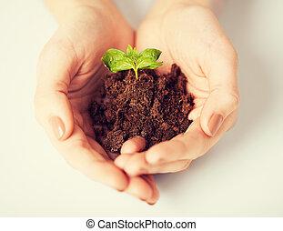 handen, met, groene, spruit, en, grond
