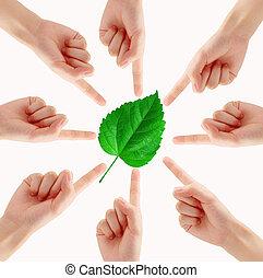 handen, omringde, witte , groen plant
