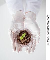 handen op, terrein, afsluiten, wetenschapper, plant