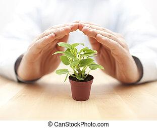 handen, plant, kleine, beschermd