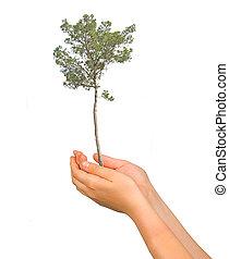 handen, symbool, bescherming, boompje, natuur